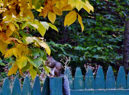 On the Fence by countrylife4me1