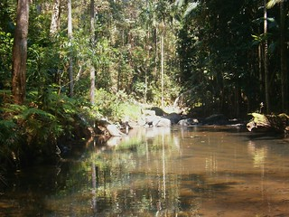 Creek - Conondale National Park