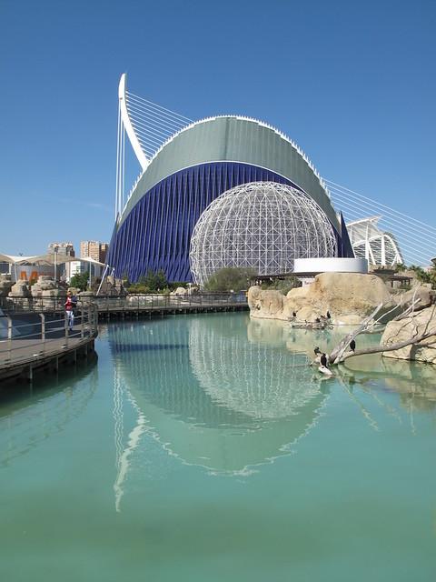 Valencia aquarium by duncan for Aquarium valencia precio