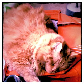 Jasper in orange bag