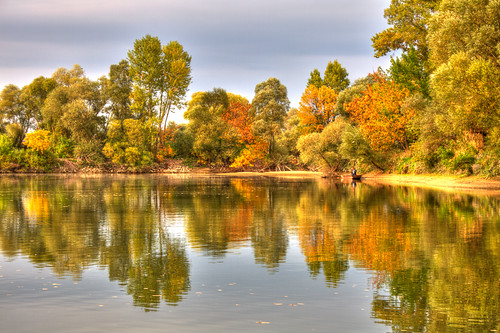 trees reflection tree forest river landscape duna hdr donau daube ywpn