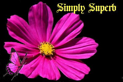 flower &butterfly