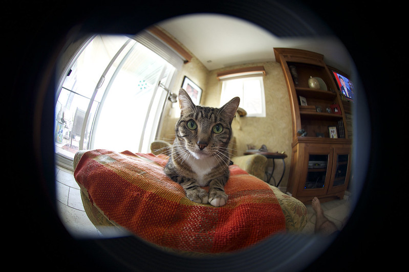Nikon DX 10.5 2.8 Fisheye on D4 FX Mode