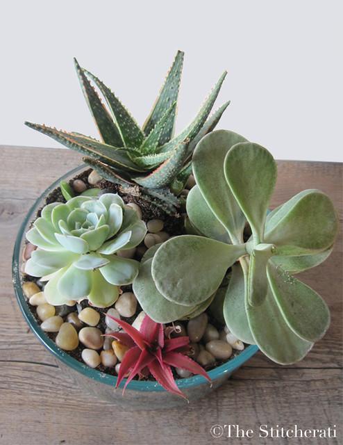 diy indoor succulent garden the stitcheratithe stitcherati