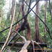 Orangutan World, Tanjung Puting Borneo Adventure-99.jpg