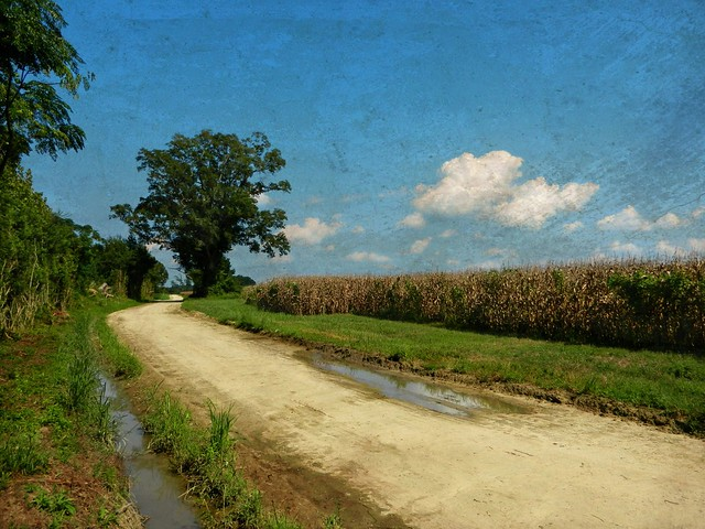 A Long and Winding Dirt Road with Fields of Dried Corn: N ...