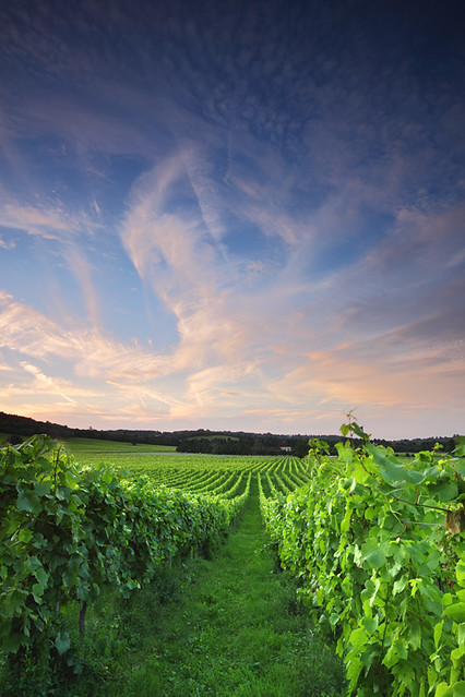 Denbie's Vineyard, Dorking, Surrey