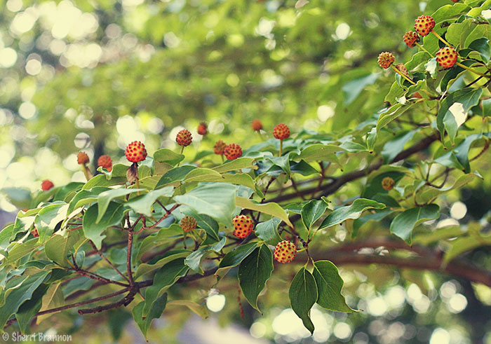 August berries