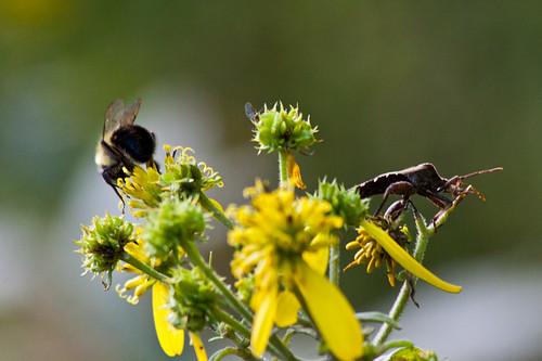 brow-bug-and-bee
