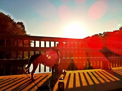 dog sunrise river august running september 2012 assabetriver skywatch norwoods funballs