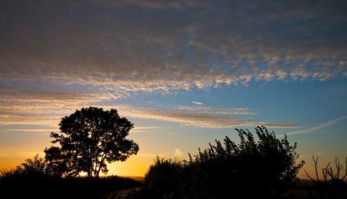 morning sky sun tree dawn lane buckingham