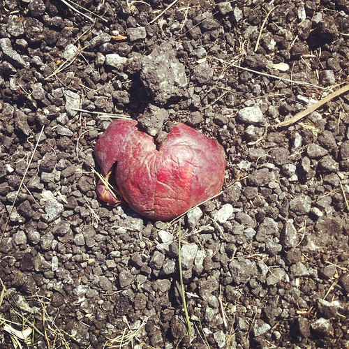 WPIR - smooshed heart shaped apple