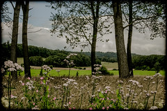 Another Picture with Flowers & Trees - Photo of Audeloncourt
