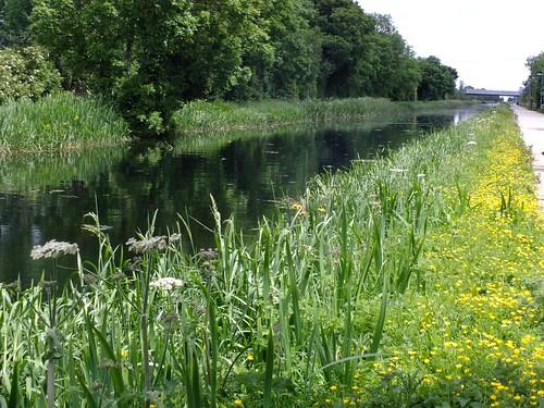 El Gran Canal, Dublín
