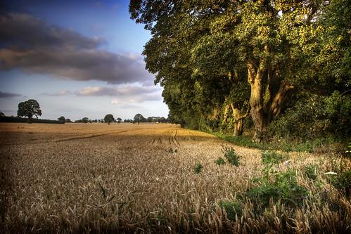 hay field dusk