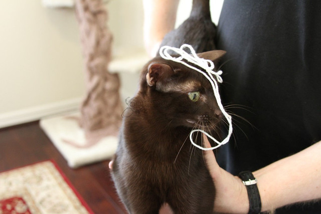 Ellie With String