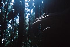 [フリー画像素材] 人物, ボディーパーツ - 手, 人物 - 森林 ID:201210051800