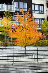 The autumn tree in the city