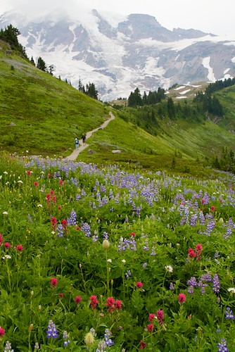 Trail through Paradise to Mt. Rainier