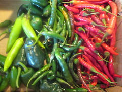 bell pepper(0.0), plant(0.0), cayenne pepper(1.0), chili pepper(1.0), capsicum(1.0), vegetable(1.0), serrano pepper(1.0), tabasco pepper(1.0), peppers(1.0), bell peppers and chili peppers(1.0), italian sweet pepper(1.0), bird's eye chili(1.0), peperoncini(1.0), produce(1.0), food(1.0), pimiento(1.0), malagueta pepper(1.0), jalapeã±o(1.0),