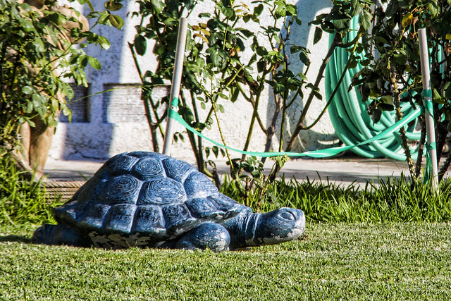 Yard art turtle