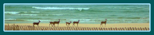 park autumn sunset usa white lake beach living midwest waves michigan deer coastal e rosemarie does fawns pure pere beachfront marquette tailed muskegon yearlings seppala fineartamerica