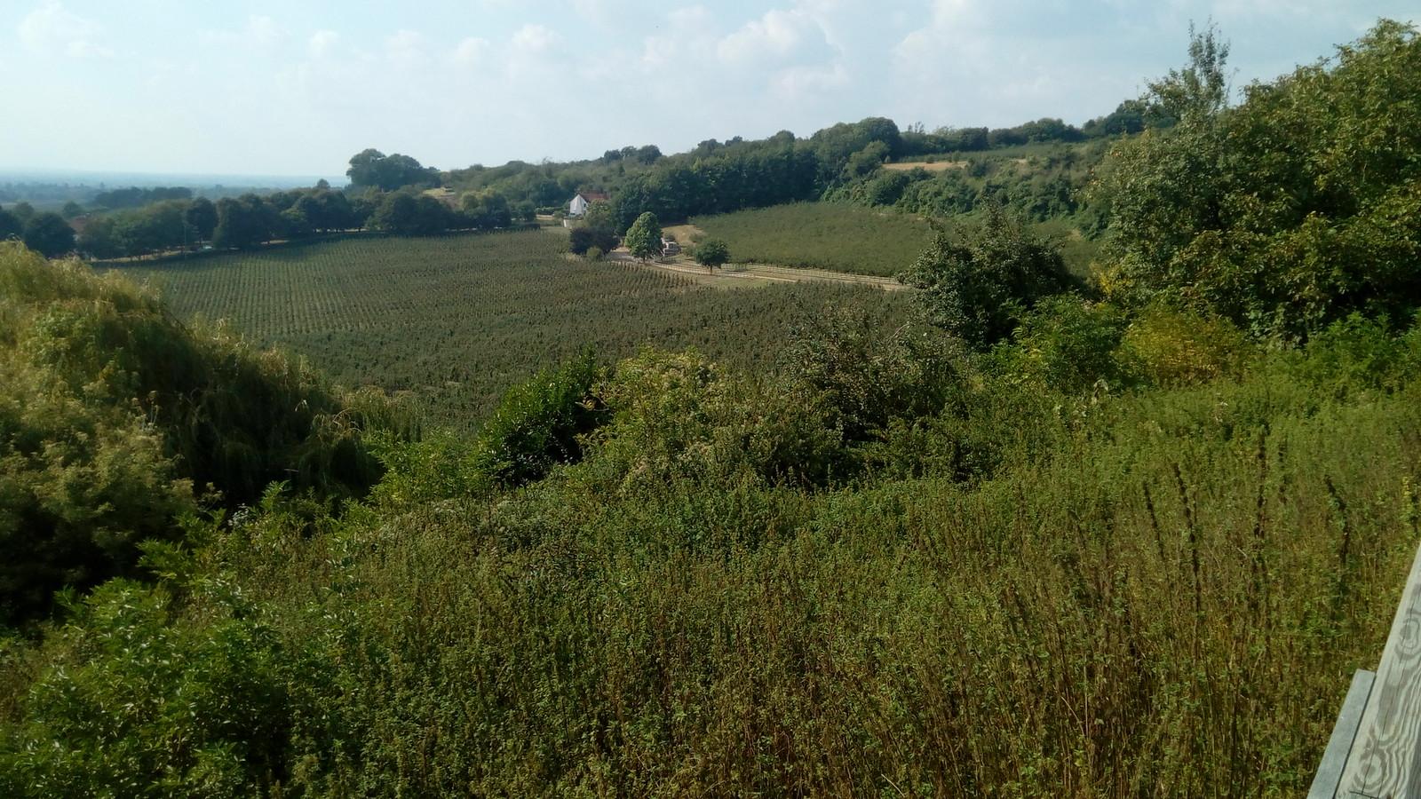 The Bull garden vista