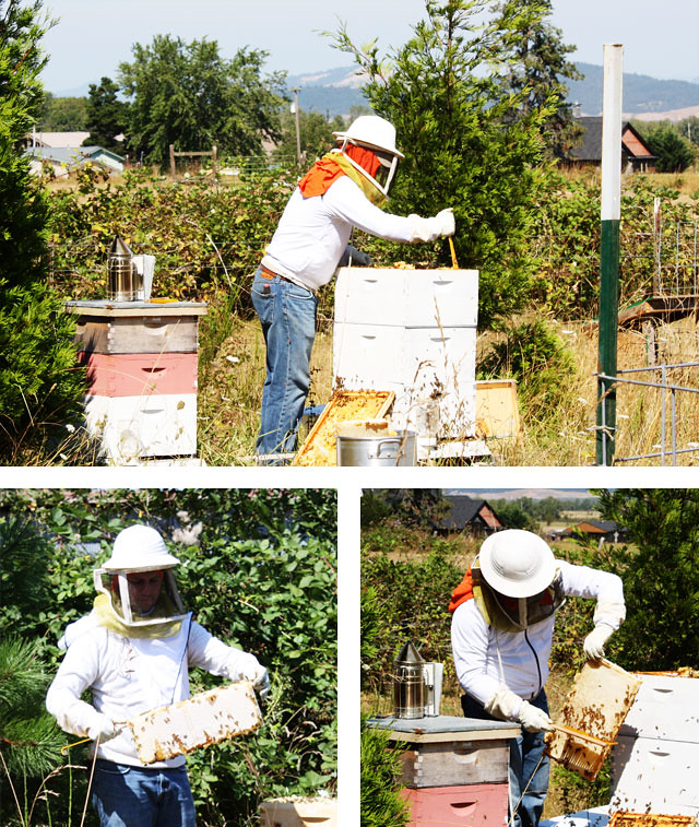 honey-harvest-6