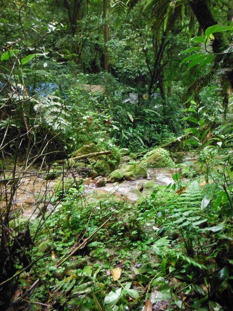 Cusuco jungle camp