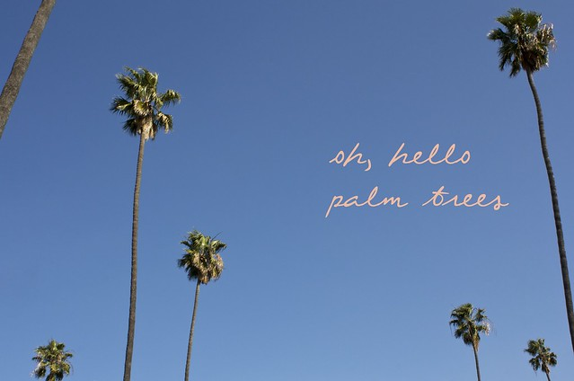 hello palm trees