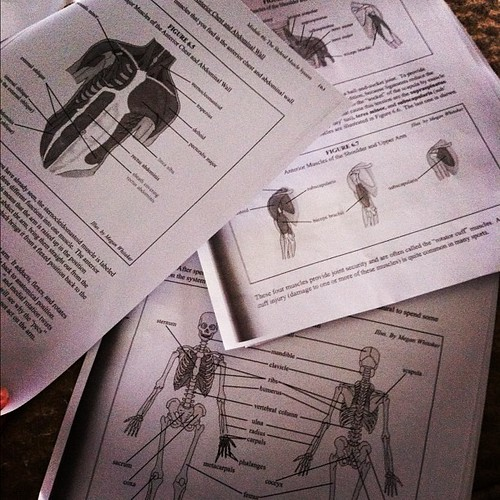 My world right now.  #homeschool #advancedbiology #havemercy