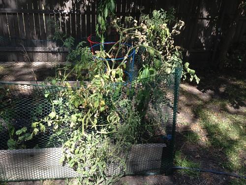 Crazy unproductive overgrowth