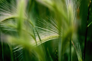 Grass | by Michael C. Dunning
