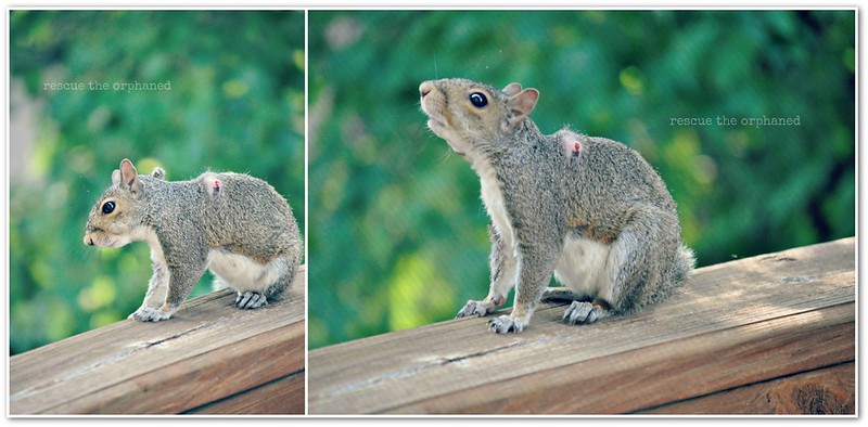 squirrel_collage1