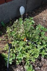 Garden Fall 2012 Season