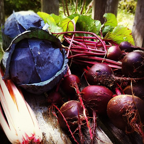 chard, cabbage and beets from our garden #organicgarden #urbangarden