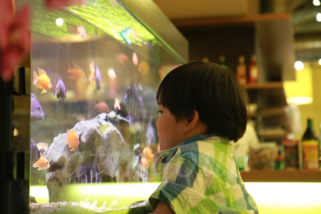 fish, watching fish, aquarium