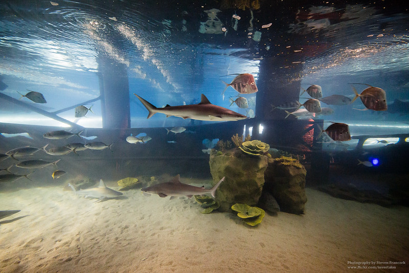Greater Cleveland Aquarium Fm Forums