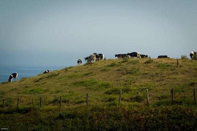 Asturias - Diario de viaje: Día 4