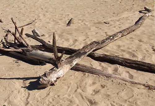crossed sticks 067