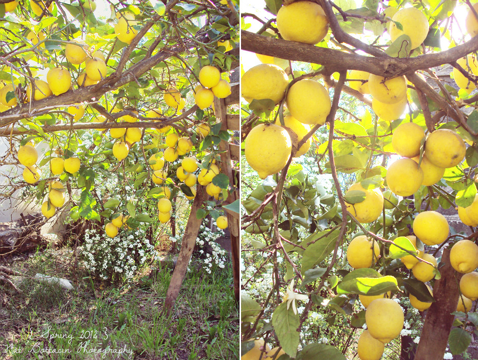 LemonDypthic