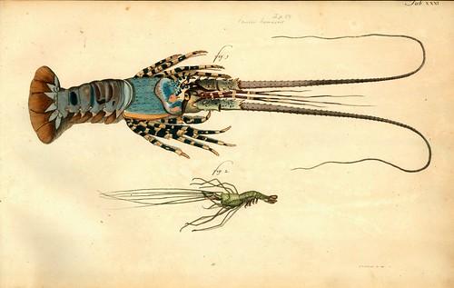 008-Â Versuch einer Naturgeschichte der Krabben und Krebse- 1790- Johann Friedrich Wilhelm Herbst- Humboldt University
