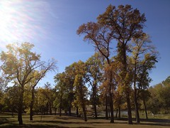 Trees at Red River, Moorhead, MN