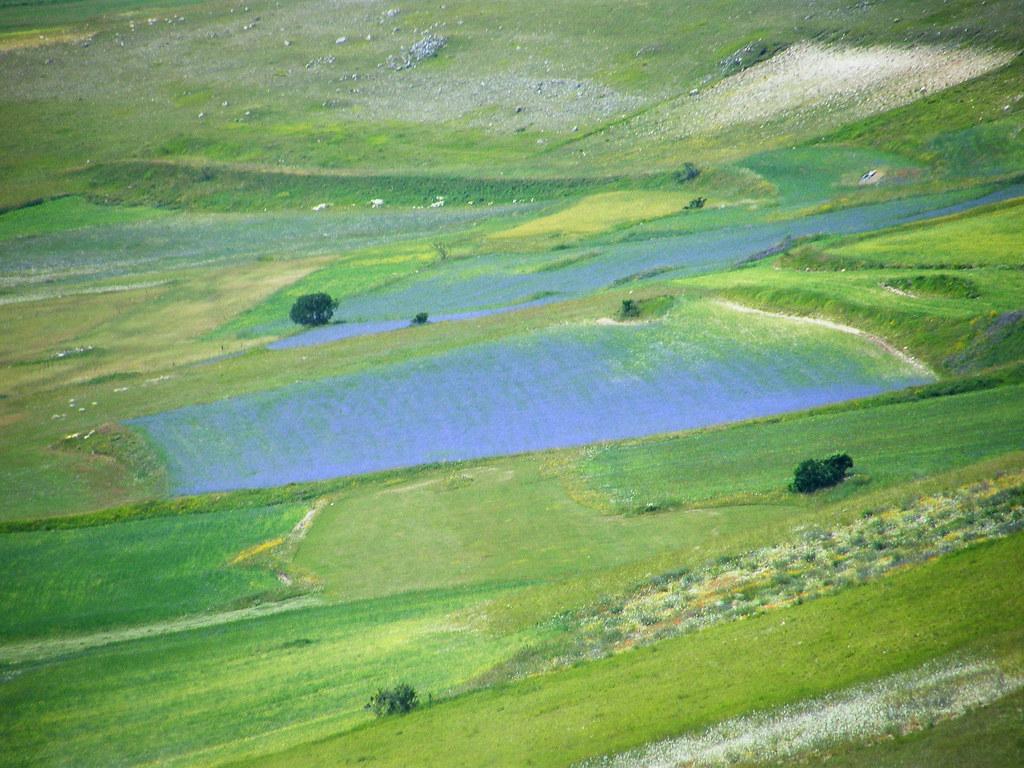 un lago di fiordalisi