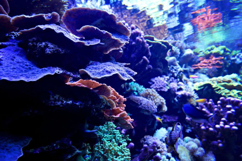 093012_aquarium09