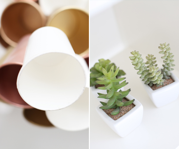 cupsplants