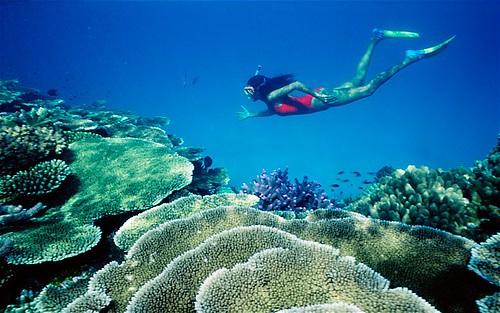Большой Барьерный риф лишился половины кораллов за 27 лет
