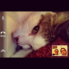 #facetime with pfluff (and the fam)