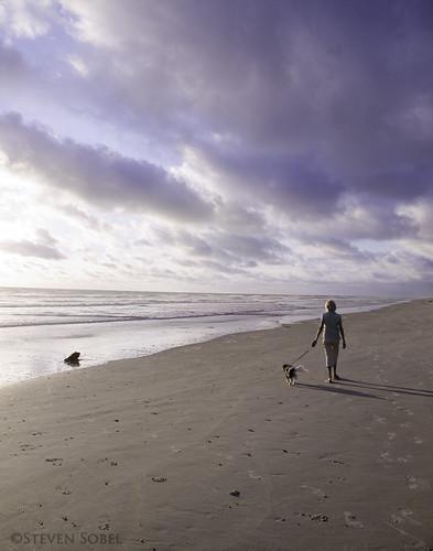 ocean morning sky dog beach clouds landscape sand nikon florida walk cooper d7k 1685mm d7000