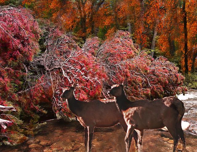 Uapitíes - Parque nacional de las Montañas Rocosas - Estados Unidos